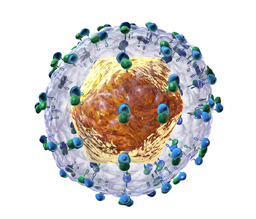 Hepatitis C virus BruceBlaus via Wikimedia Commons
