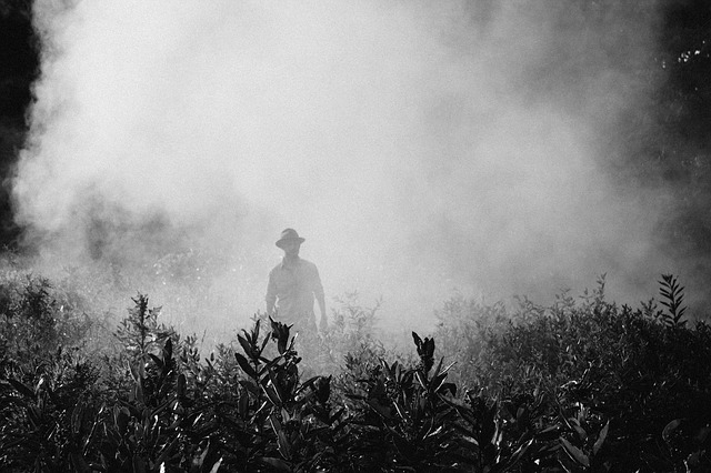 New Content Item © https://pixabay.com/en/fog-steam-person-farmer-spraying-918976/