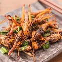Advances in Insects for Food and Feed © stockphototrends / Getty Image